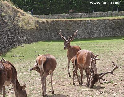 Jaca Con Niños Museo Miniaturas Karts En Jaca Juegos Para Todos En Ludopía Osos Cabras Sarrios En El Parque Faunístico De Borce Pista De Hielo Ecoparque El Juncaral Cueva De Las Güixas
